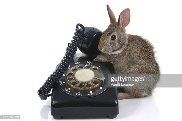 baby hare and old telephone - brown hare stock pictures, royalty-free photos & images