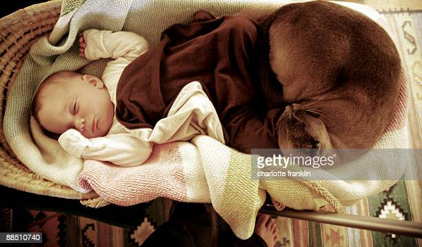 Baby in cosy basket