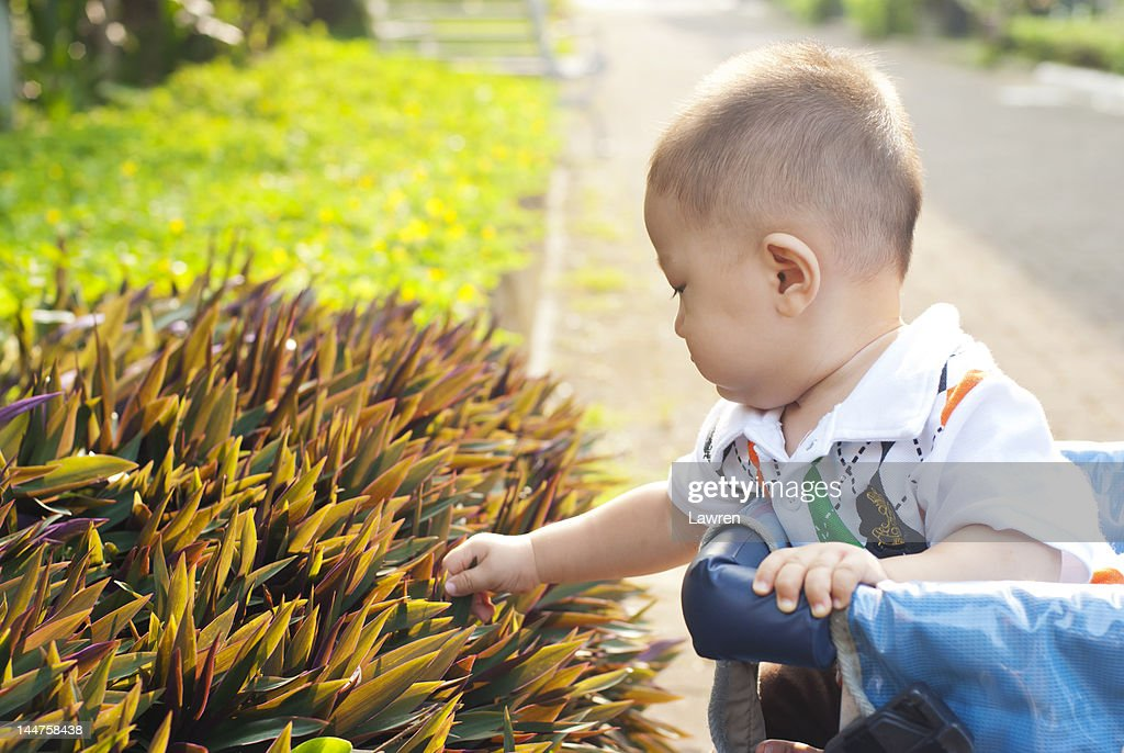 Baby is touching plant in garden : Stock Photo