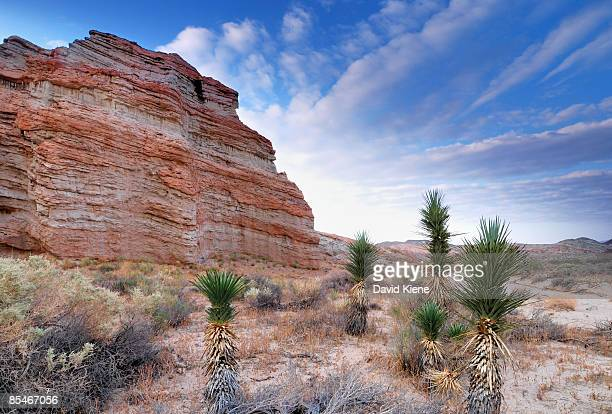 baby joshua trees - red_rock,_nevada stock pictures, royalty-free photos & images