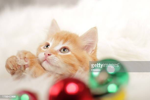 baby kitten - christmas kittens stock pictures, royalty-free photos & images