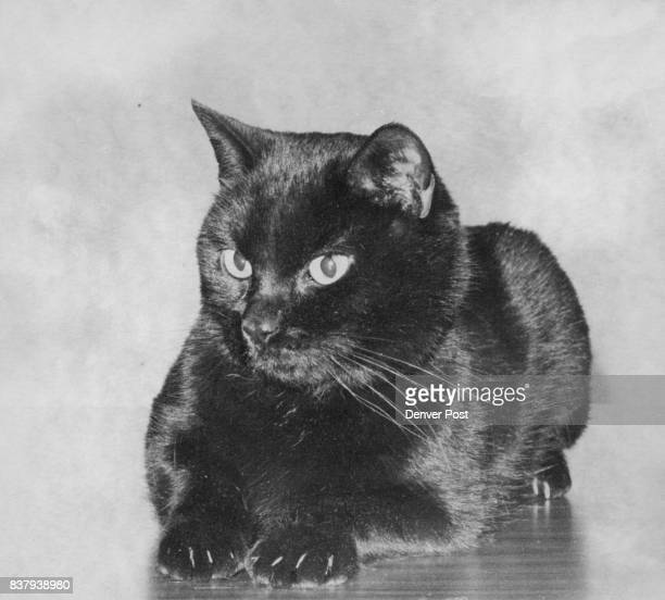 FEB 20 1981 FEB 21 1981 ' Baby kitty ' likes children Baby Kitty is a 2yearold black neutered male Siamese mix He is good with children of any age...