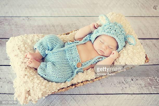 Baby lamb in basket