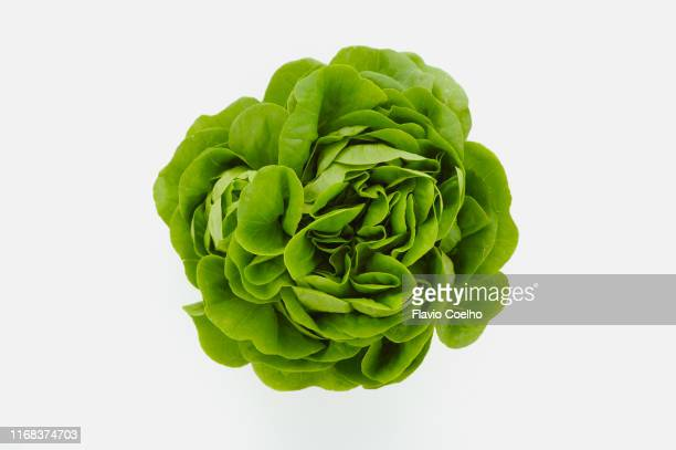 baby lettuce head - salad stock pictures, royalty-free photos & images