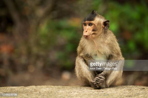 9 839 Cute Monkey Photos And Premium High Res Pictures Getty Images