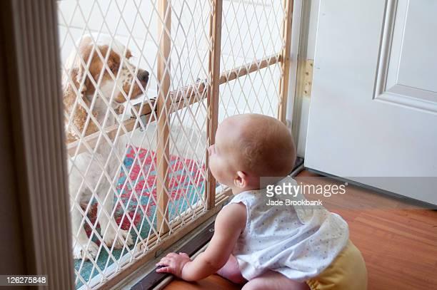 Baby looking at dog through baby gate