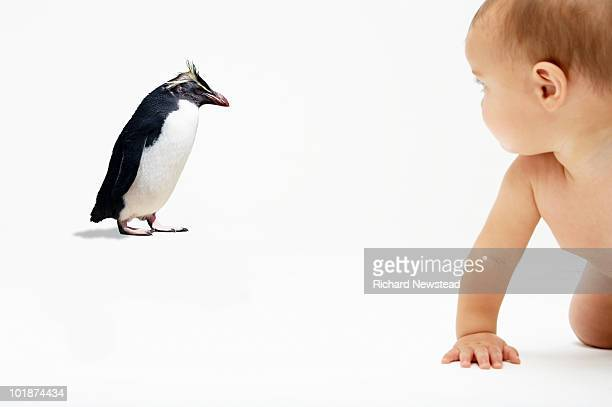 baby looking at penguin - rockhopper penguin stock pictures, royalty-free photos & images