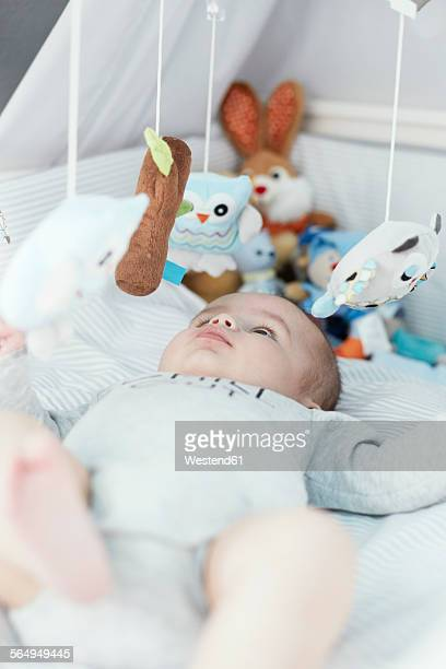 Baby lying in crib looking at cuddly toys