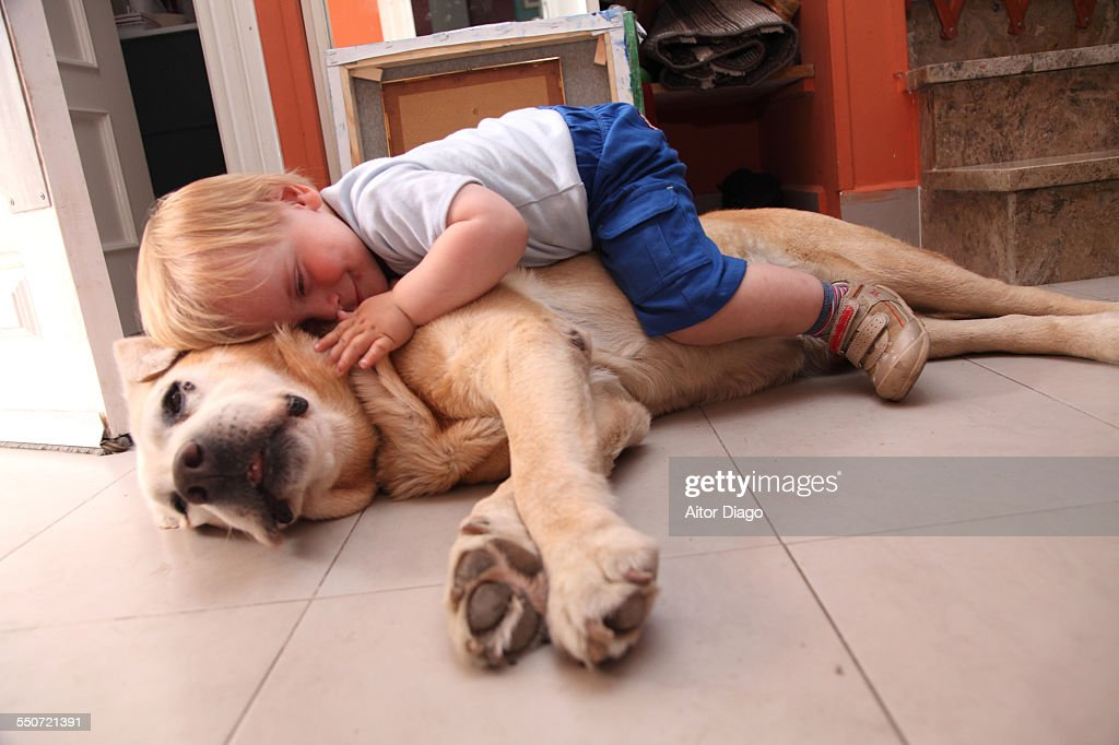 Baby on a dog, cares about dog : Foto de stock