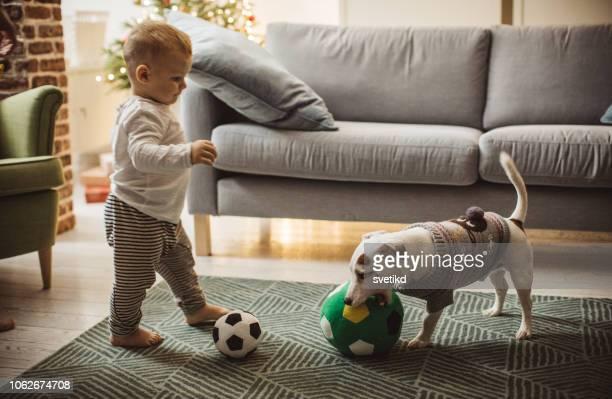 bebê brincando com cachorro - animal doméstico - fotografias e filmes do acervo