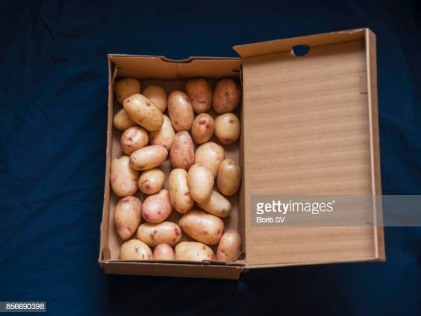 baby potatoes in a shoe-box - shoe box stock pictures, royalty-free photos & images