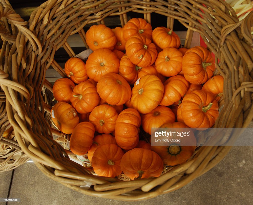 Baby pumpkins for sale in basket : Stock Photo