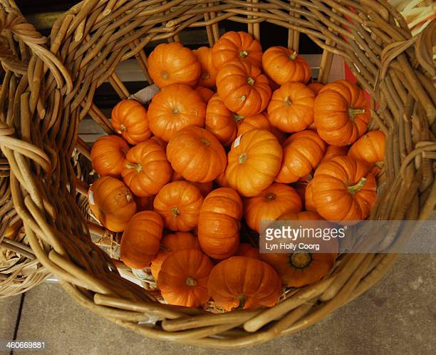 baby pumpkins for sale in basket - lyn holly coorg imagens e fotografias de stock