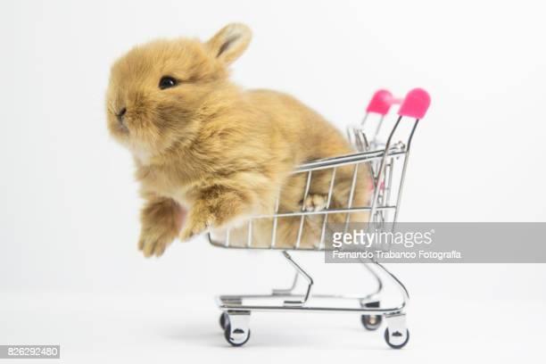 baby rabbit in shopping cart - coniglietto foto e immagini stock