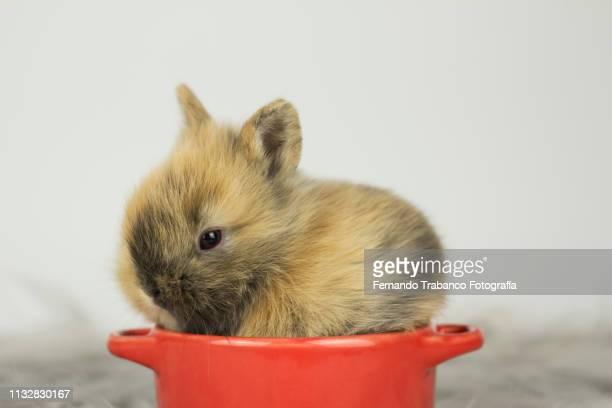 Baby rabbit inside a pot