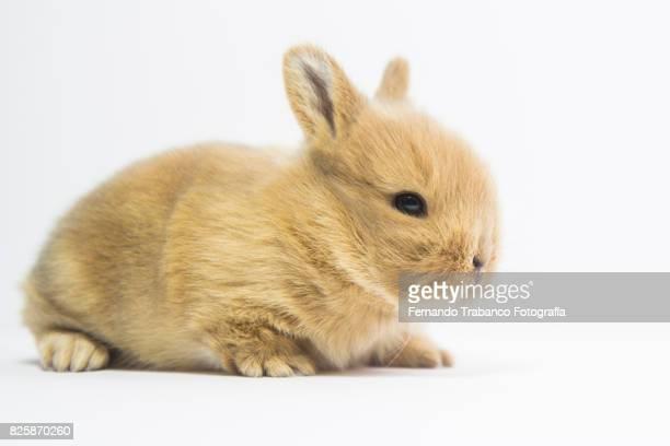 baby rabbit - coniglietto foto e immagini stock