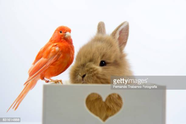 Baby rabbit with a small red bird