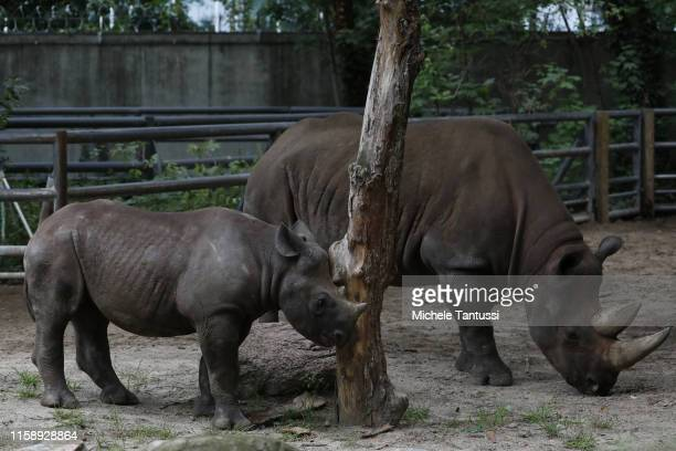 Baby Rhino walks with her mother during the 175th anniversary at the Berlin Zoo on August 1, 2019 in Berlin, Germany. The Berlin Zoological Garden...