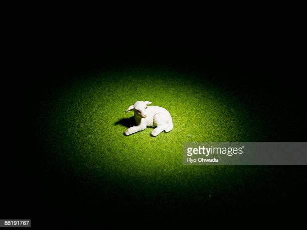 baby sheep of miniature - 子羊 ストックフォトと画像