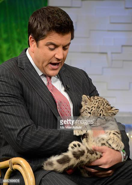 AMERICA OUCH A baby snow leopard tastes Josh Elliott for breakfast on GOOD MORNING AMERICA 12/11/13 airing on the Walt Disney Television via Getty...