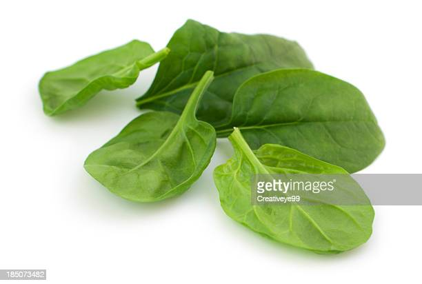 baby spinach leaves - spinach stock pictures, royalty-free photos & images