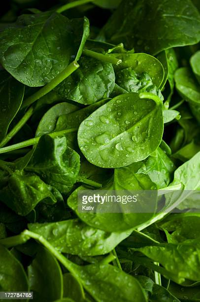 baby spinach - spinach stock photos and pictures