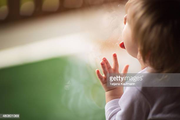 baby / toddler licking on window glass - licking stock pictures, royalty-free photos & images