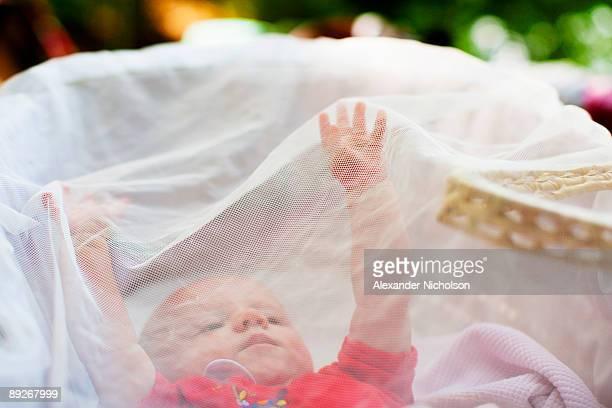 Baby under mosquito net