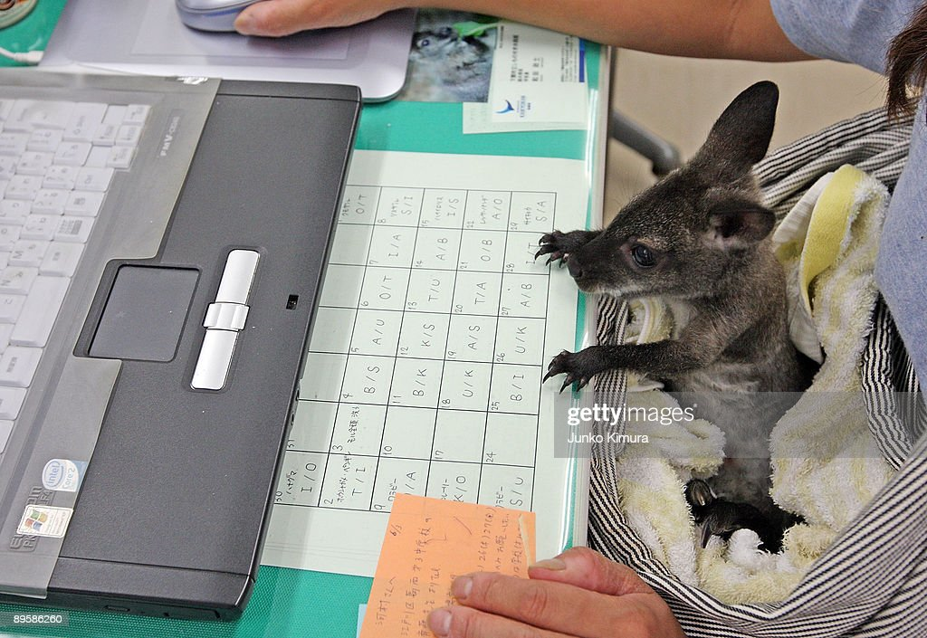 Babies Of Squirrel Monkey And Wallaby Attract Visitors : News Photo