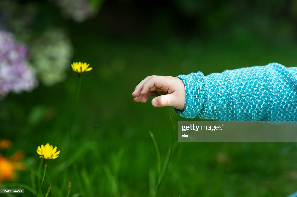 A baby's hand reaching for flowers : Stock Photo
