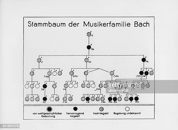 Bach Johann Sebastian *2103168528071750Komponist D Stammbaum der Musikerfamilie Bach bewertet nach musikalischer Begabung undatiert