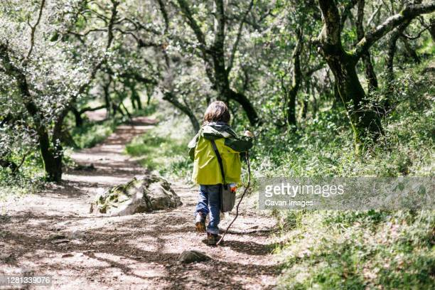 back child hiking by tunnel of trees in nature - petaluma stock pictures, royalty-free photos & images
