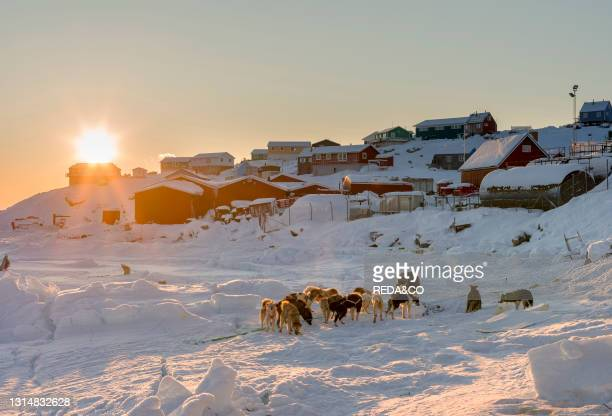 Back from the hunt. The traditional and remote greenlandic inuit village Kullorsuaq. Melville Bay. Part of Baffin Bay. America. North America....