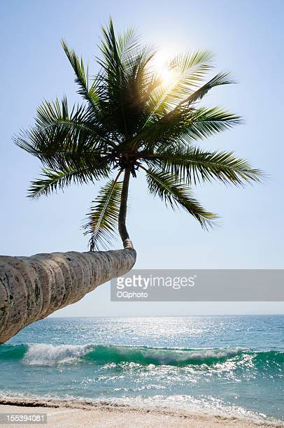 back lit palm tree with sun flare - ogphoto stock photos and pictures