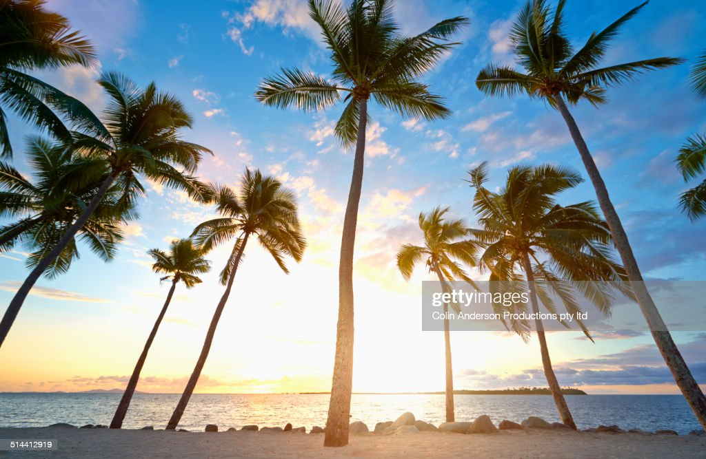 Back lit palm trees on tropical beach : Stock Photo