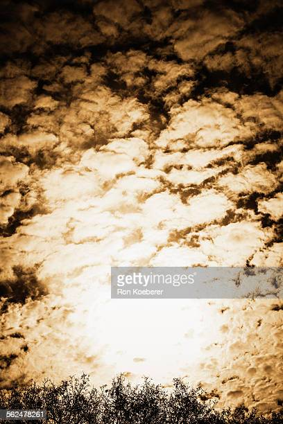 back lit trees and clouds in sonoma county. - koeberer stock pictures, royalty-free photos & images