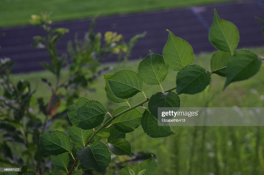 Back Of Leaves : Stock Photo