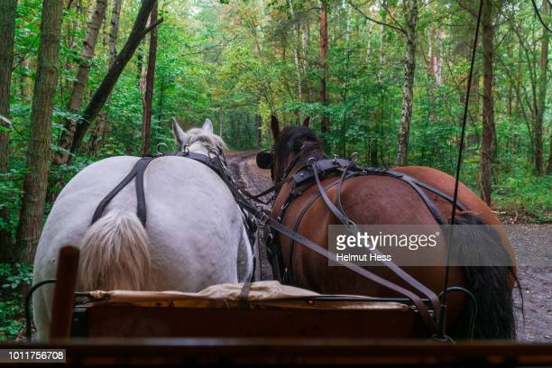 Back of two horses in front of a carriage