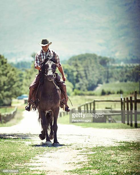 back on the ranch - male animal stock pictures, royalty-free photos & images