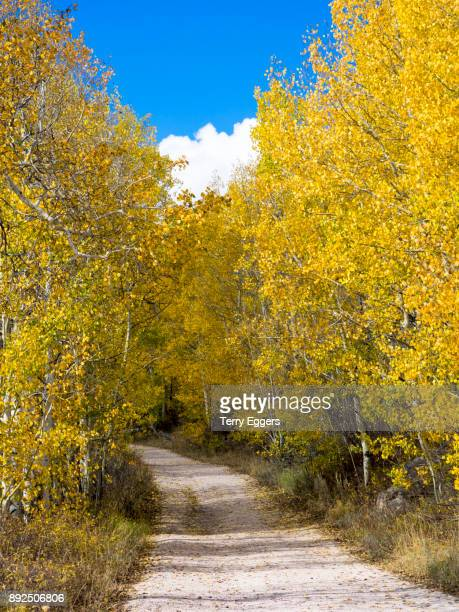Back Road through Colorful aspens in Logan Canyon Utah in the autumn