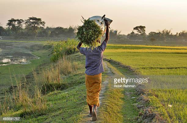back to home. - bangladesh village stock photos and pictures