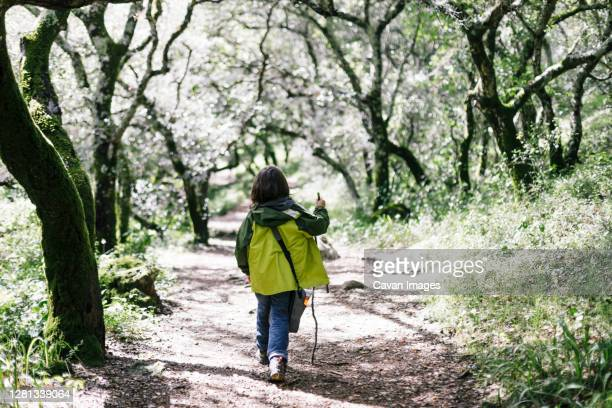 back view boy hiking stick by forest - petaluma stock pictures, royalty-free photos & images