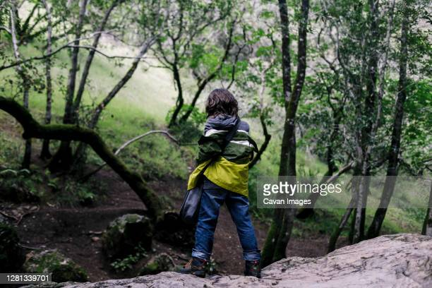 back view boy standing over rock looking forest - petaluma stock pictures, royalty-free photos & images