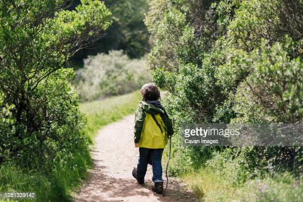 back view of child walking stick between treen - petaluma stock pictures, royalty-free photos & images