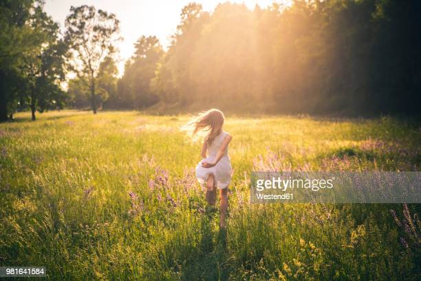 back view of girl running on flower meadow at evening twilight - wiese stock-fotos und bilder