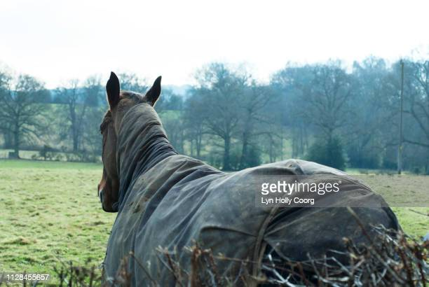 back view of horse with coat on in winter - lyn holly coorg stock pictures, royalty-free photos & images