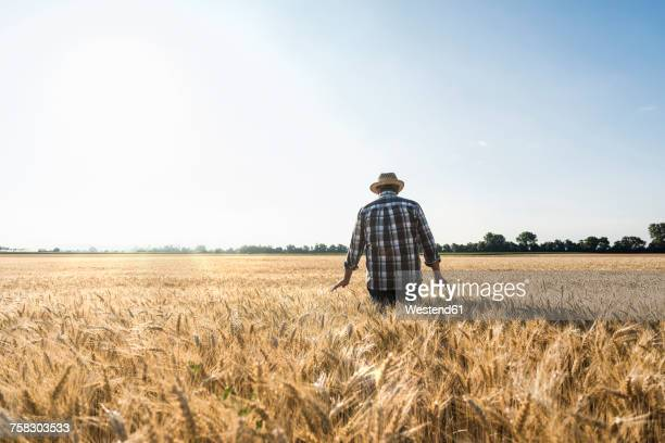 back view of senior farmer standing in wheat field - wheat stock pictures, royalty-free photos & images