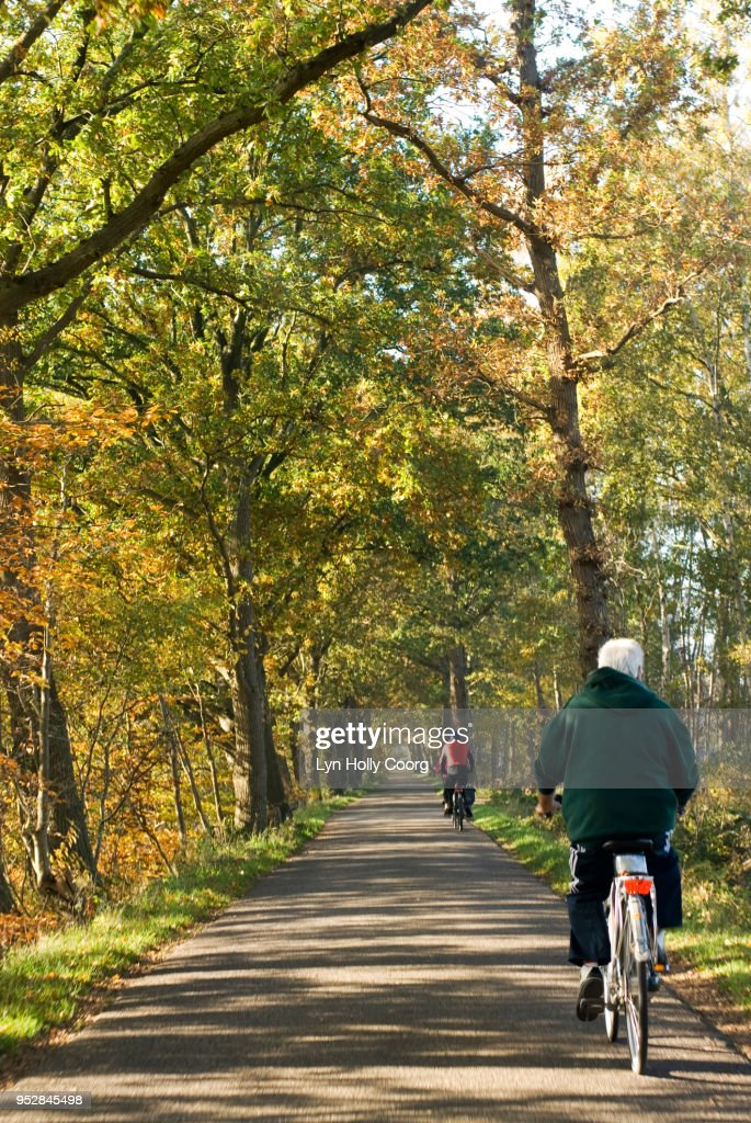 Back view of senior man riding a bicycle through woods : Stock Photo