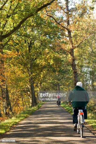 back view of senior man riding a bicycle through woods - lyn holly coorg stock pictures, royalty-free photos & images