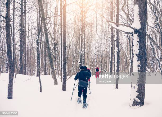 Back view of tourist or group of trekkers on snow trail in the snow forest